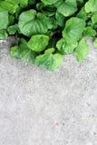 Erba verde e calcestruzzo freschi Fotografia Stock Libera da Diritti