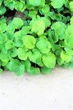 Erba verde e calcestruzzo freschi Immagini Stock