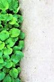 Erba verde e calcestruzzo freschi Fotografie Stock