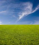 Erba verde e cielo Immagine Stock