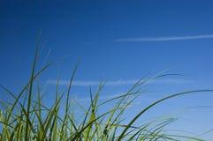 Erba verde e cielo blu Fotografie Stock