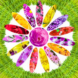Erba verde e collage dei fiori Fotografia Stock Libera da Diritti