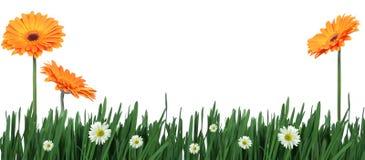 Erba verde e fiori Immagine Stock