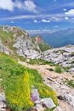 Erba verde e fiori fra le pietre in montagne Fotografie Stock