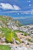 Erba verde e fiori fra le pietre in montagne Immagini Stock Libere da Diritti