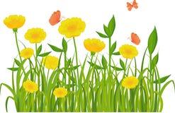 Erba verde e fiori isolati su bianco Immagini Stock Libere da Diritti