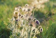 Erba verde e fiori in primavera Fotografia Stock Libera da Diritti