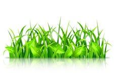 Erba verde e foglie Fotografia Stock