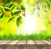 Erba verde e foglie della molla fresca con il pavimento verde del bokeh, di luce solare e di legno Immagini Stock