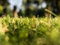 Erba verde e fondo vago fotografia stock libera da diritti