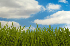 Erba verde e nubi Immagine Stock