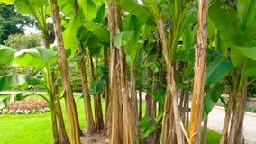 Erba verde e piante video d archivio