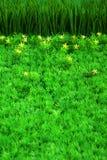 Erba verde e piccoli fiori Immagini Stock