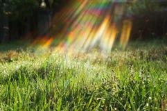 Erba verde e sole, concetto di protezione dell'ambiente Fotografia Stock