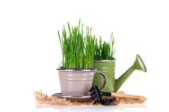 Erba verde e strumenti di giardino Fotografie Stock
