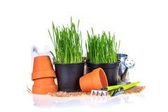 Erba verde e strumenti di giardino Fotografia Stock