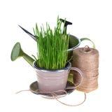Erba verde e strumenti di giardino Fotografia Stock Libera da Diritti