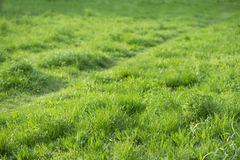 Erba verde e un percorso Immagini Stock Libere da Diritti