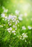 Erba verde e wildflower con le gocce di rugiada Fotografia Stock Libera da Diritti