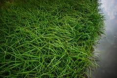 Erba verde ed acqua Fotografie Stock Libere da Diritti