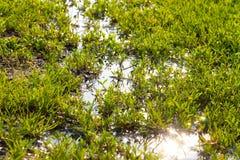 Erba verde ed acqua dolce Fotografia Stock Libera da Diritti