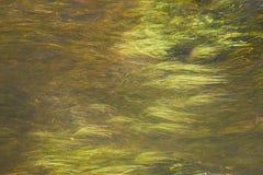 Erba verde ed acqua, valle di Rio Putana, deserto di Atacama, Cile immagine stock