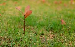 Erba verde ed alberi Fotografia Stock