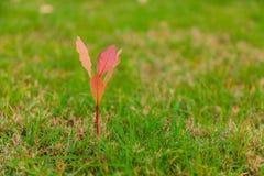 Erba verde ed alberi Fotografia Stock Libera da Diritti