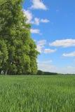 Erba verde ed alberi Alberi della sorgente, erba verde, paesaggio della campagna, frutteto dell'albero del fiore Fotografia Stock