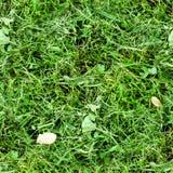 Erba verde falciata senza cuciture Fondo, struttura Immagini Stock