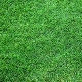 Erba verde fertile immagine stock