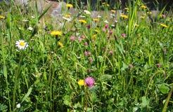 Erba verde fertile con i fiori selvaggi Fotografie Stock