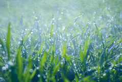 Erba verde fertile con le gocce di caduta Fotografie Stock Libere da Diritti