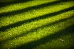 Erba verde fertile con le ombre diagonali lunghe degli alberi Fotografie Stock Libere da Diritti