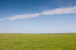 Erba verde fertile della sorgente nel pascolo della prateria Fotografia Stock