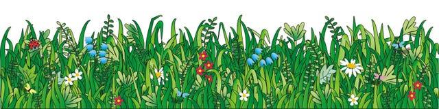 Erba verde, fiori selvaggi illustrazione di stock