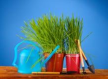 Erba verde in flowerpot due Fotografie Stock Libere da Diritti