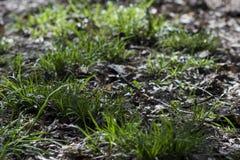 Erba verde in foresta, luce solare Fotografia Stock Libera da Diritti