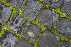 Erba verde fra i cobblestones bagnati Fotografia Stock Libera da Diritti