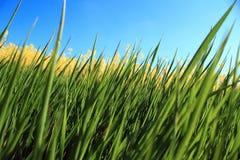 Erba verde fresca Immagine Stock Libera da Diritti