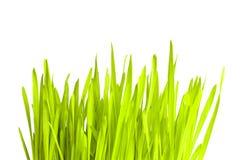 Erba verde fresca Fotografie Stock Libere da Diritti