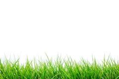 Erba verde fresca Fotografie Stock
