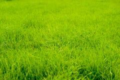 Erba verde fresca immagini stock libere da diritti