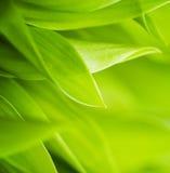 Erba verde fresca Fotografia Stock Libera da Diritti