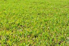 Erba verde fresca al giorno soleggiato della molla La sorgente Campo verde spazioso Fondo, struttura dell'erba verde immagini stock