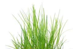Erba verde fresca al sole Immagini Stock