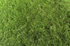 Erba verde fresca come fondo Immagine Stock