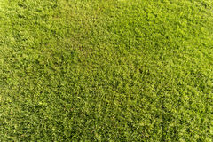 Erba verde fresca come fondo Fotografia Stock Libera da Diritti