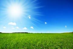 Erba verde fresca con cielo blu luminoso Fotografie Stock Libere da Diritti