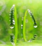 Erba verde fresca con il primo piano di gocce di rugiada Fotografie Stock